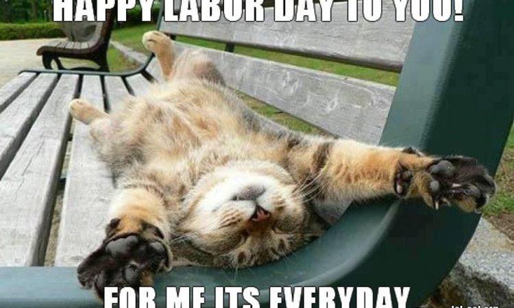 labour day cat meme.jpeg
