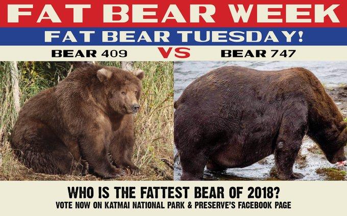 bear finalists