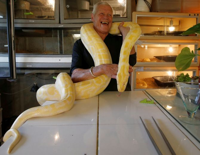Philippe Gillet, 67 year-old Frenchman who lives with more than 400 reptiles and tamed alligators, poses with a python in his house in Coueron near Nantes