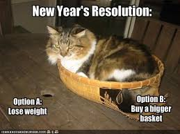 cat-resolution-2