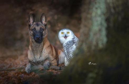dog-owl-1