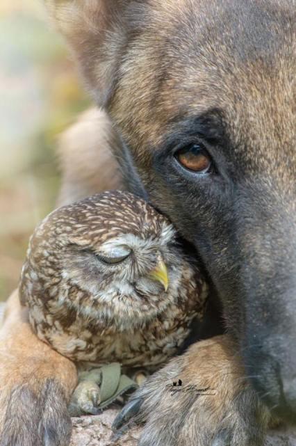 dog-owl-10