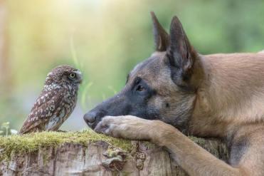 dog-owl-11