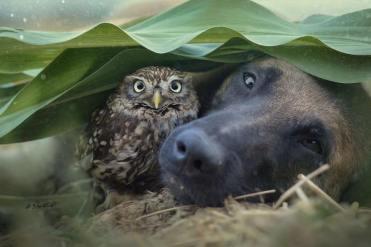 dog-owl-12