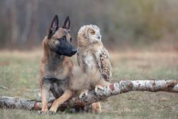 dog-owl-2