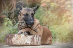 dog-owl-4