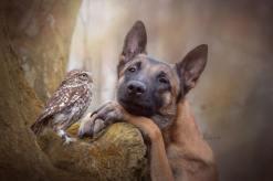 dog-owl-5
