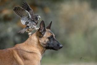 dog-owl-9