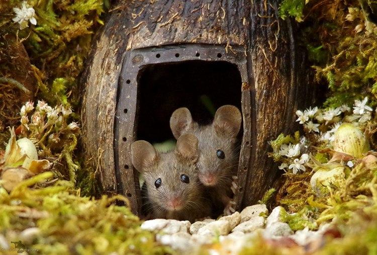 mice-1.jpg