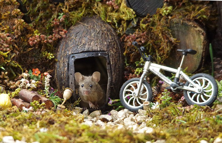 mice-10.jpg