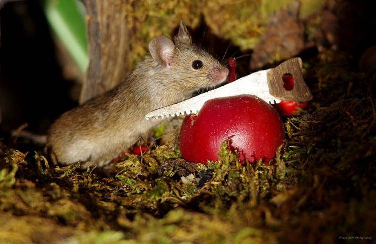 mice-11.jpg