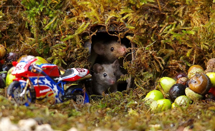 mice-12.jpg