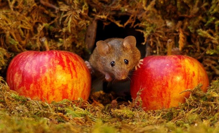 mice-13.jpg
