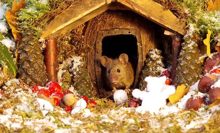 mice-14.jpg