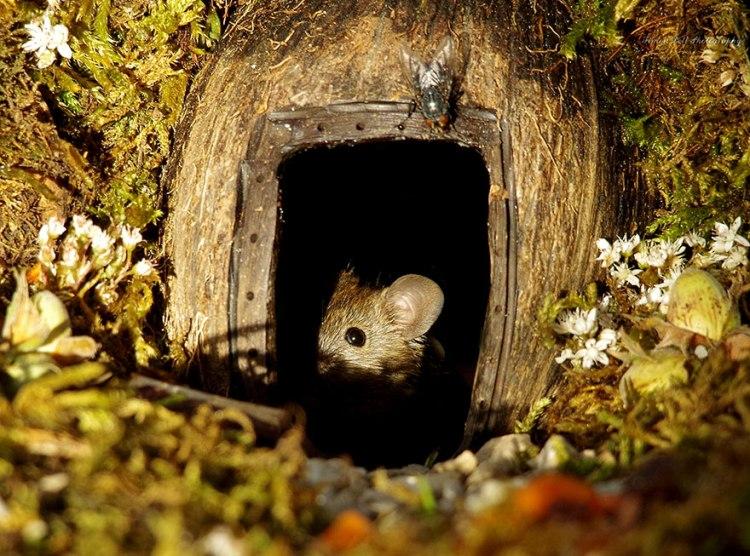 mice-15.jpg