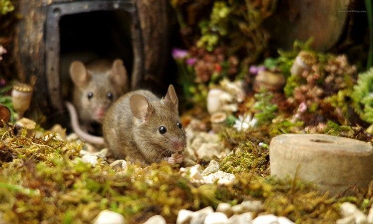 mice-16.jpg
