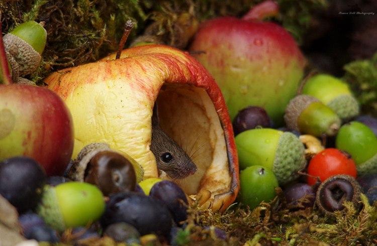 mice-17.jpg