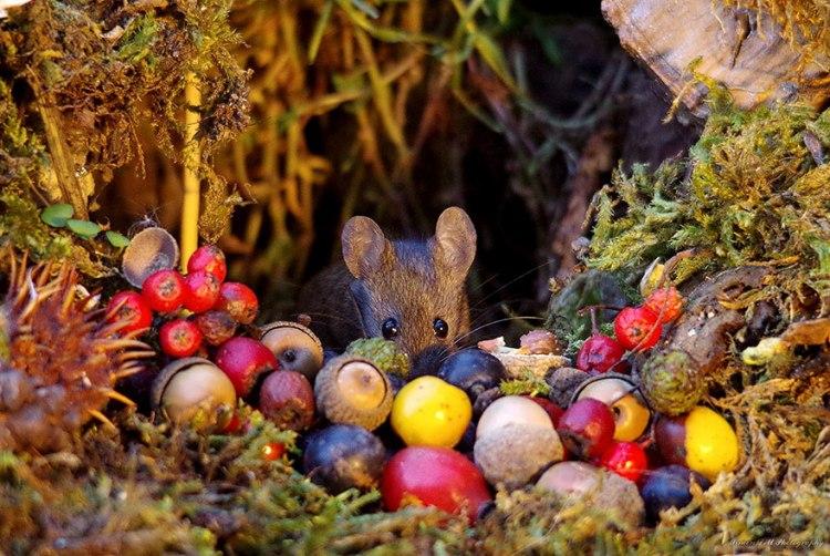 mice-18.jpg