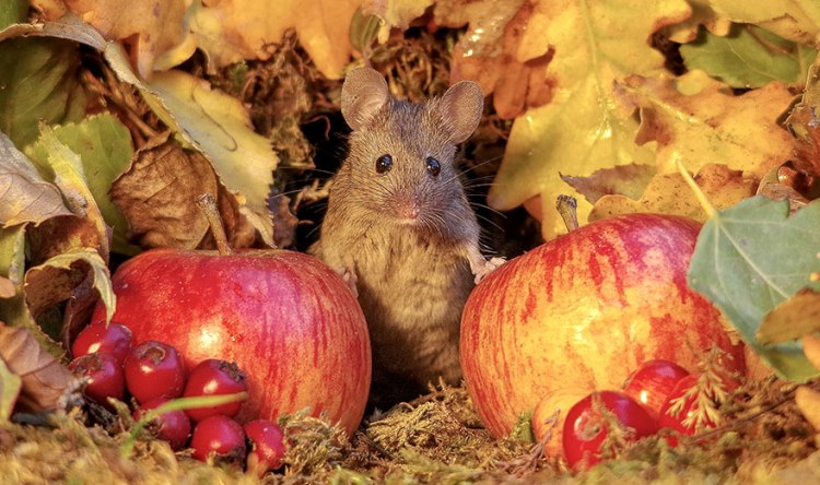 mice-20.jpg