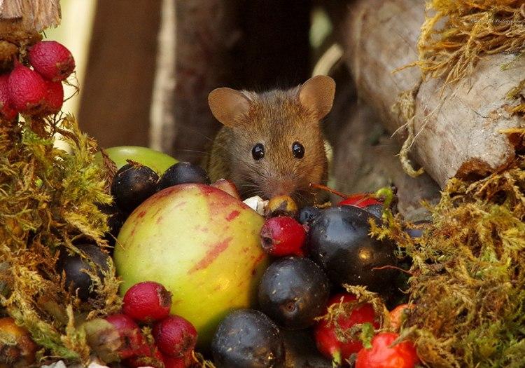 mice-5.jpg