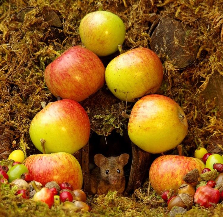 mice-6.jpg