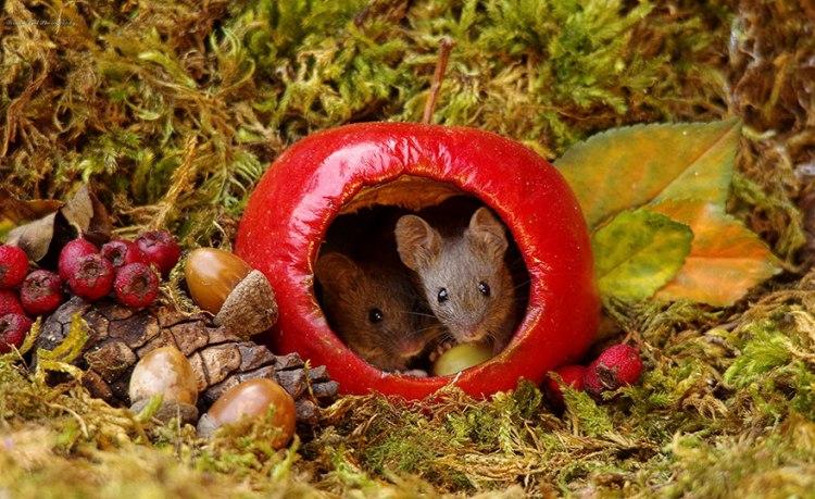 mice-8.jpg