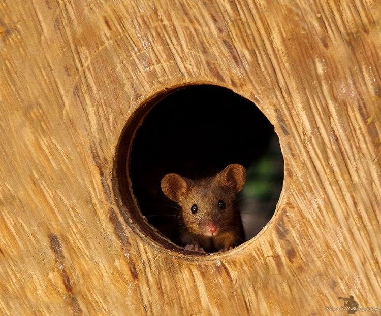 mice-9.jpg