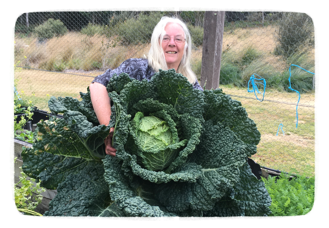 huge cabbage.png