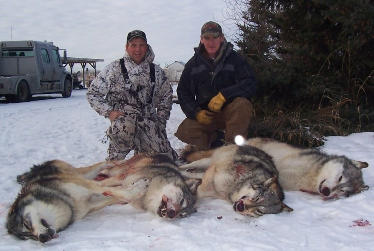 aerial-killing-wolves