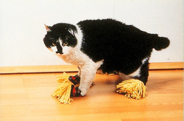 cat-mop
