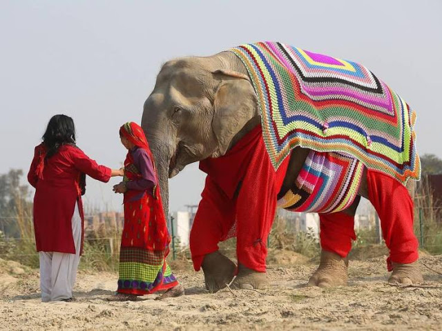 dressed-elephant