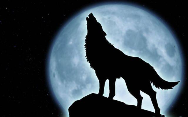 howling wolf.jpg
