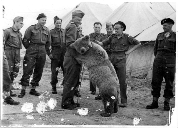 Wojtek with his regiment