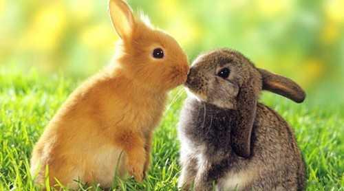 Baby-Bunnies