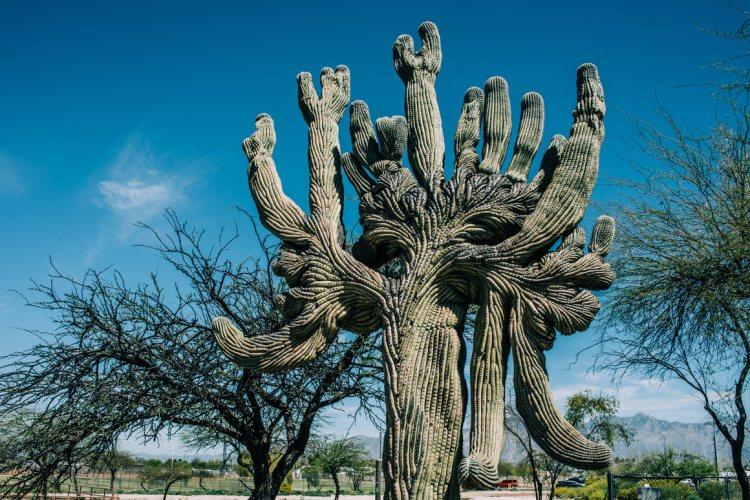candelabra-cactus.jpg