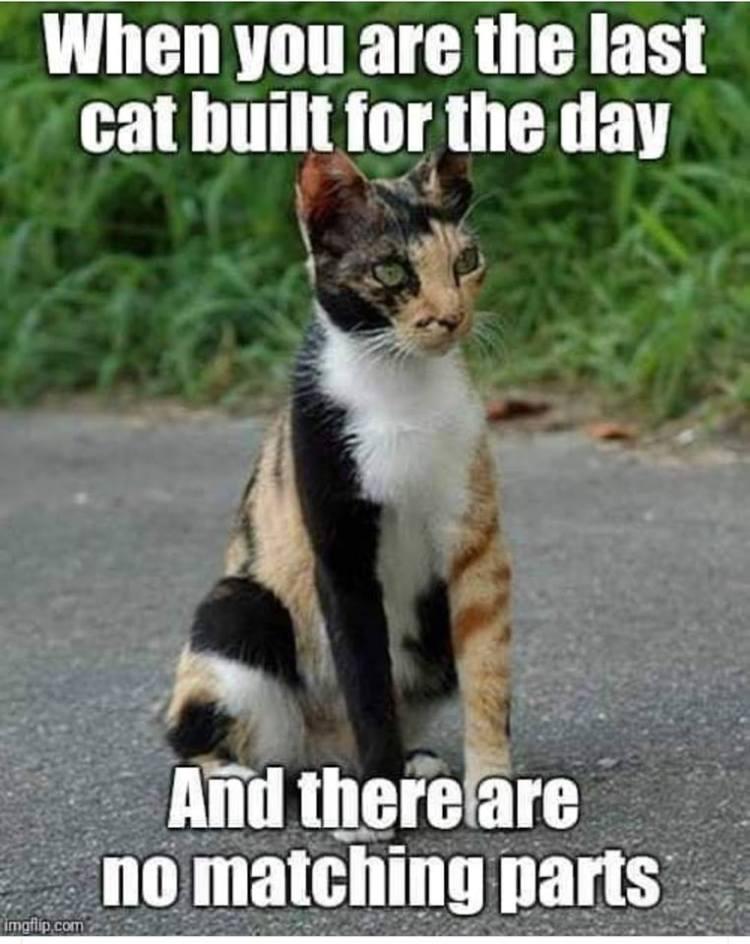 cat-meme