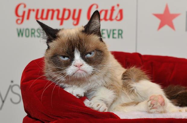 grumpy-5.jpg