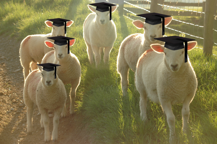 sheep-education.png