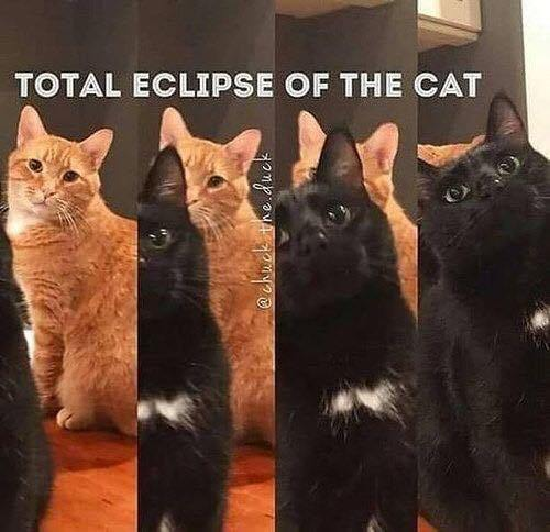 cat-eclipse