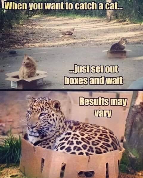 cat-humour