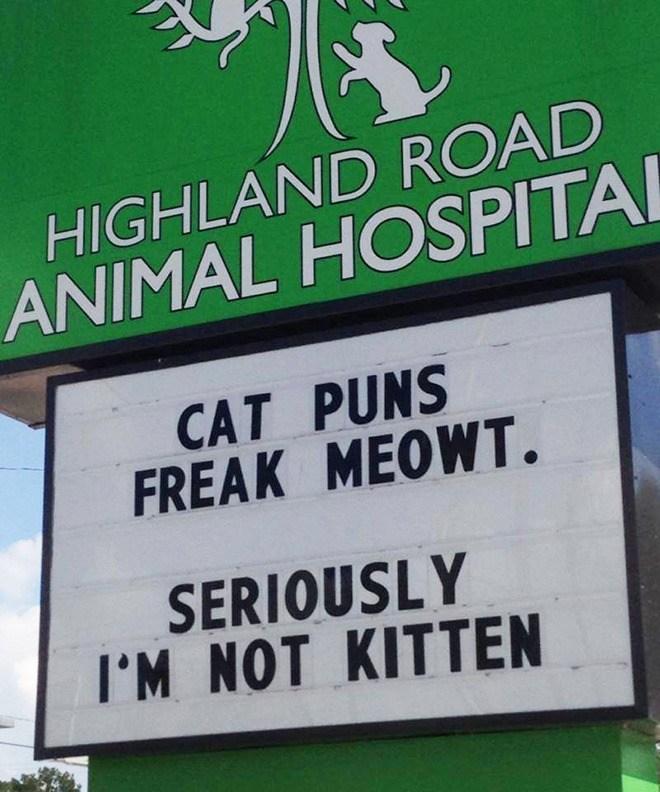 Cat-puns...