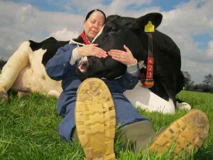 cuddling-cows-2