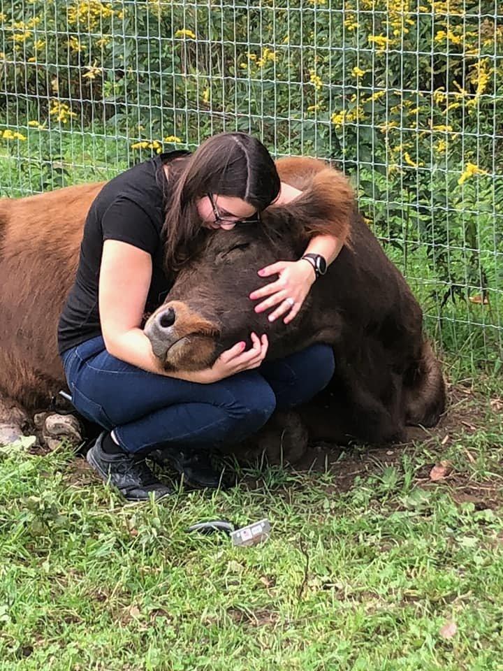 cuddling-cows