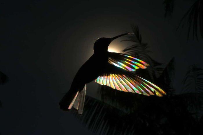 hummingbird-6