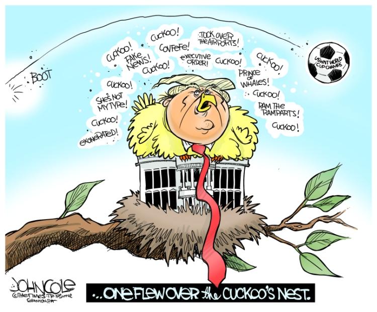 Trump-cuckoo