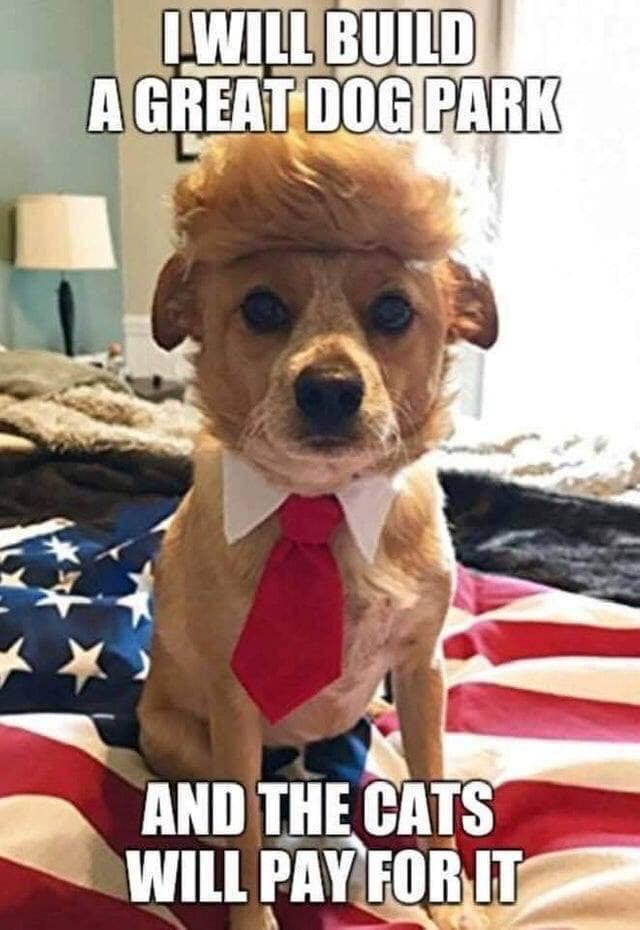 trump-dog