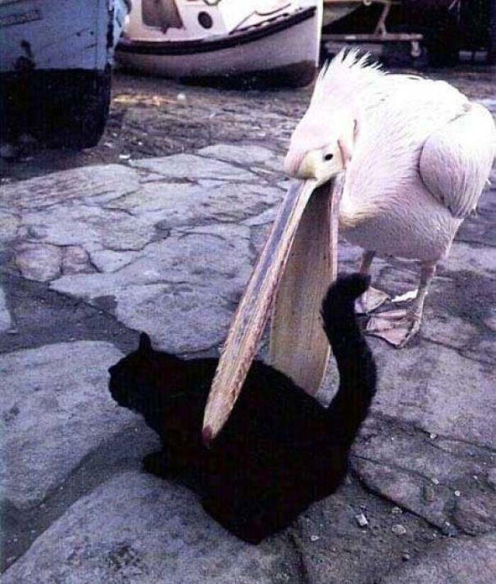 bird-cat
