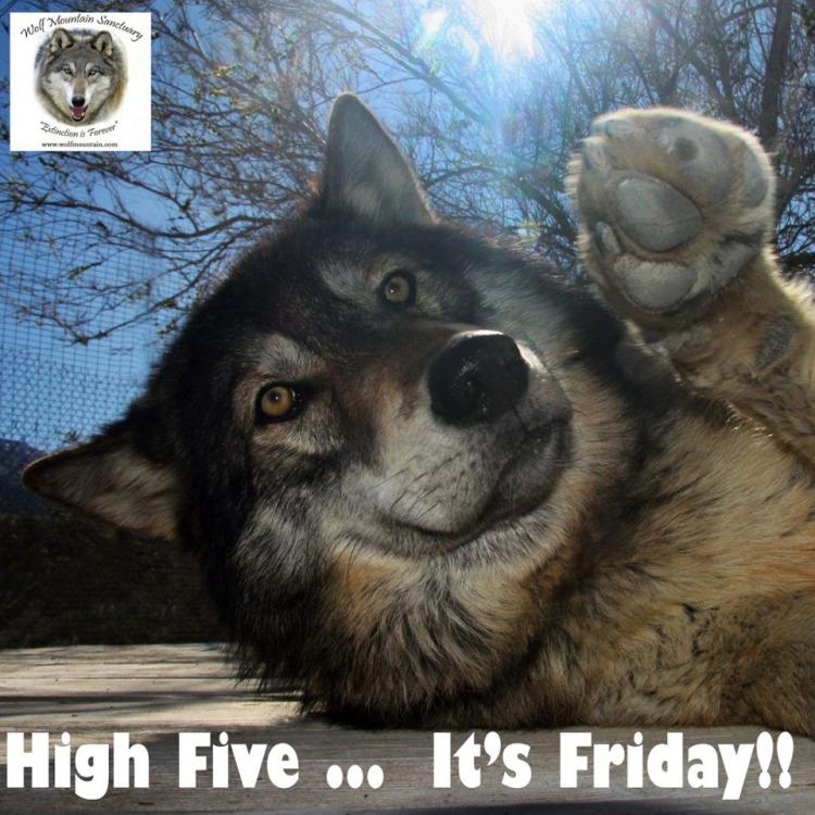 Wolf-Friday