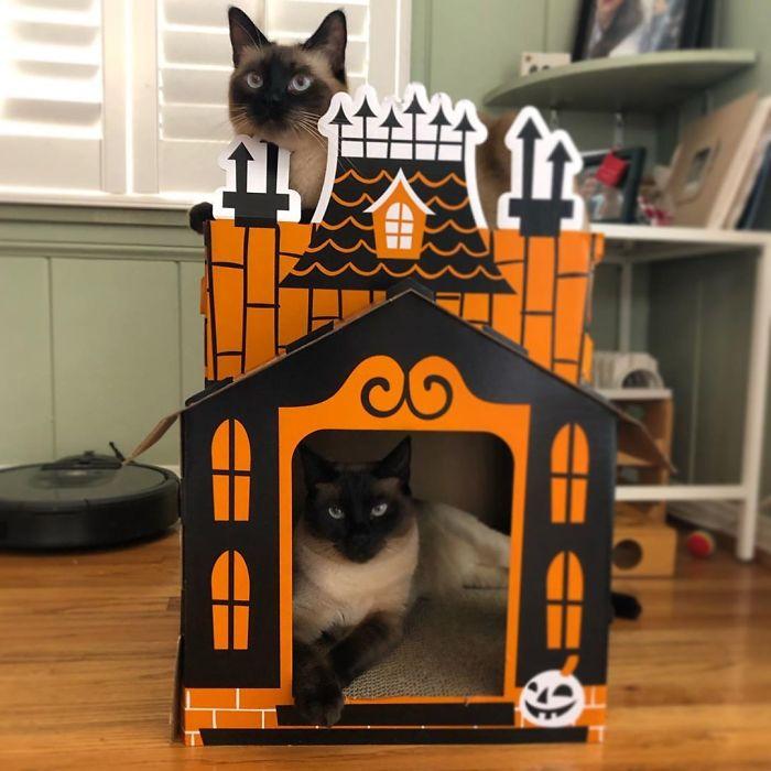 cathouse-3