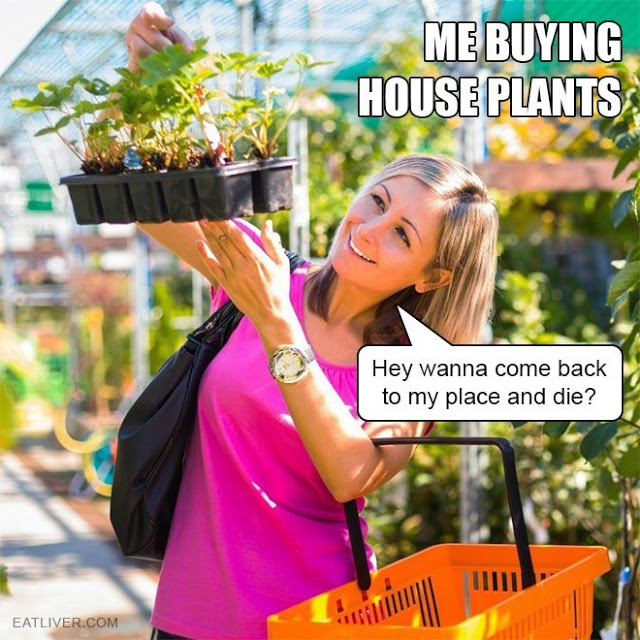 Me-buying-house-plants...